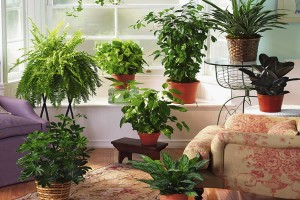 Комнатные растения сегодня в моде