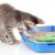 Какой выбрать наполнитель для кошачьего туалета